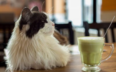 CAT CAFE – בית קפה עם חתולים