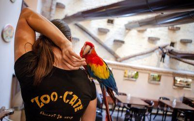 ZOO CAFE – בית קפה עם חיות